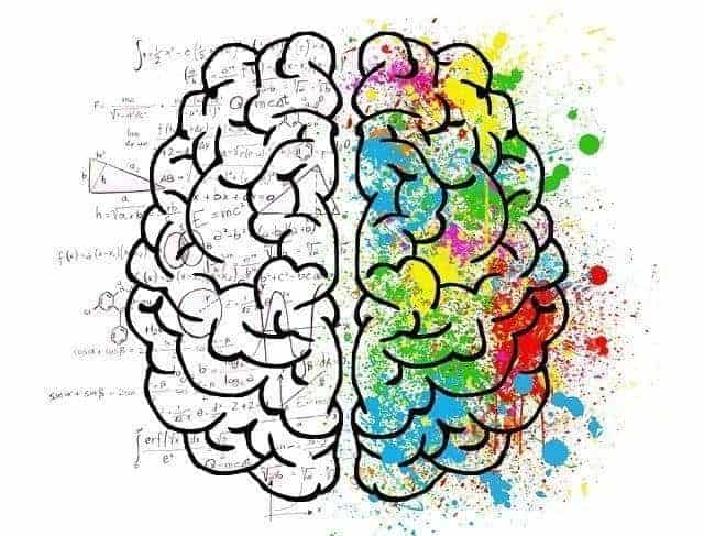 brain 2062057 640